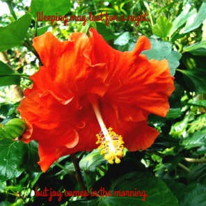 https://plantedbylivingwater.wordpress.com/2016/09/16/joy-comes-in-the-morning/